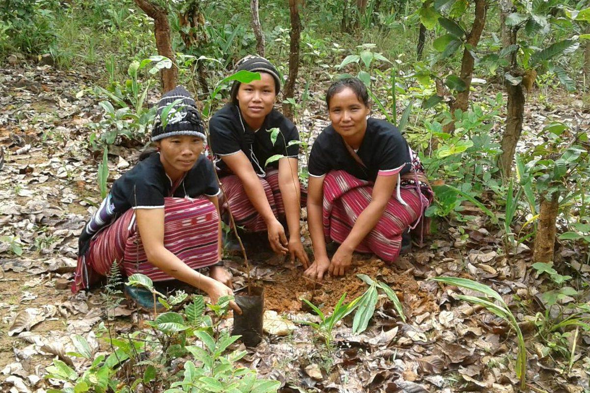Kvinnor som planterar träd i Thailand