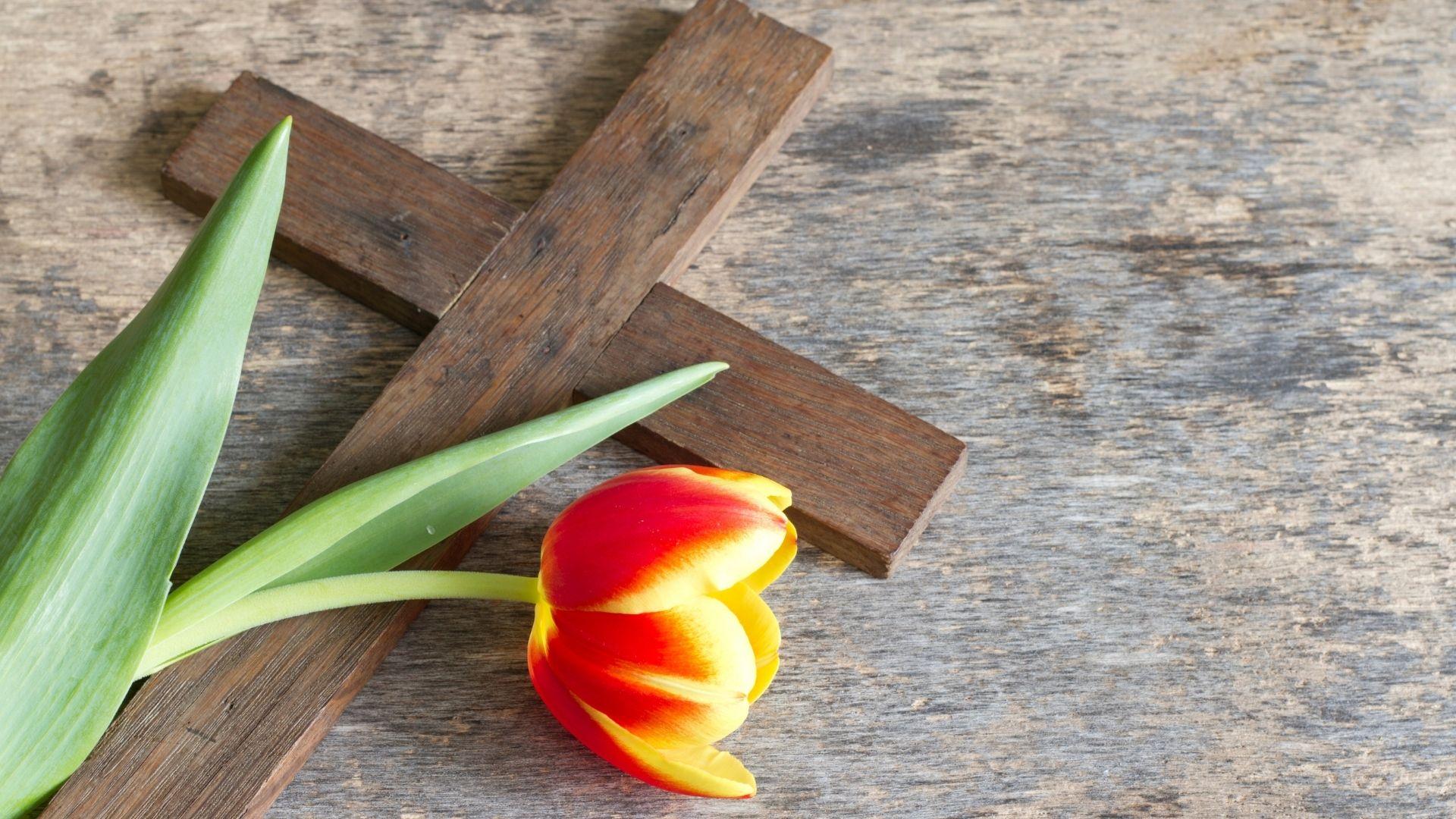 kors tulpan allmänt gudstjänst