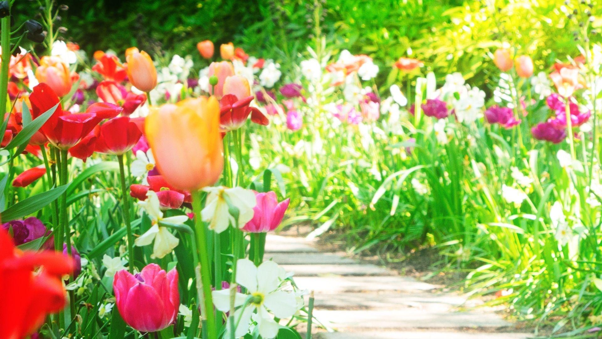 vår tulpaner blommor stig