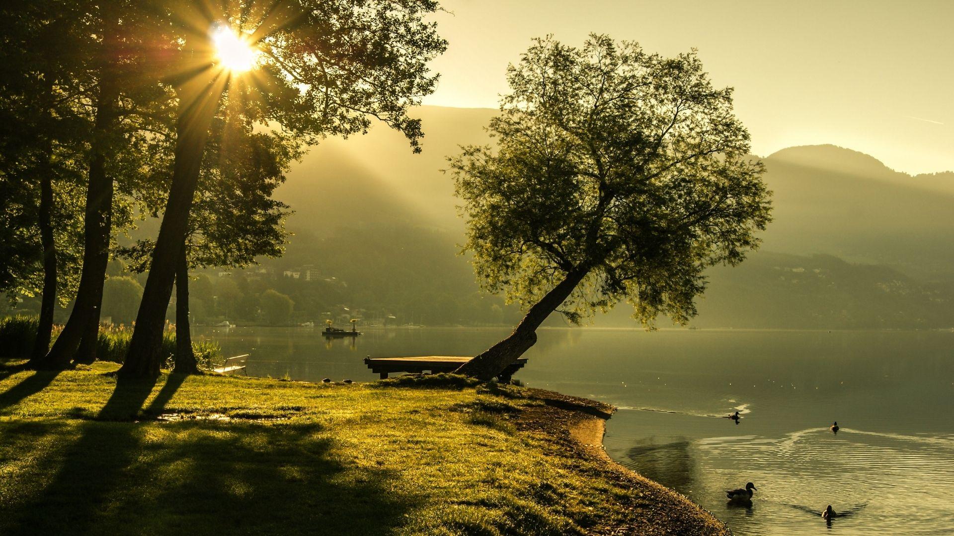 vatten sjö änder skog strand soluppgång morgon